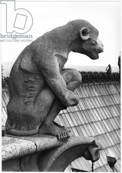 Monkey gargoyle, from the balustrade of the Grande Galerie of the west facade, replica of a 12th century original (stone) (b/w photo)