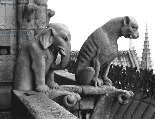 Elephant and lion gargoyles from the balustrade of the Grande Galerie of the west facade, replica of a 12th century original (stone) (b/w photo)