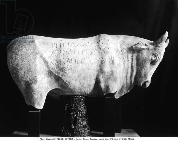 Sculpture depicting a bull, taken from the Exhedra of the Attic Herod of Olympia Sculpture