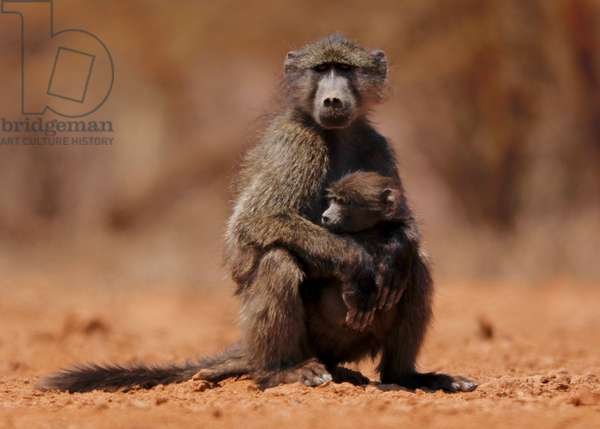 Mother and child (baboon), 2019 (photograph)