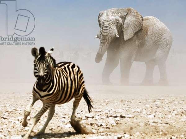 Elephant and Zebra, Etosha, 2018, (photograph)