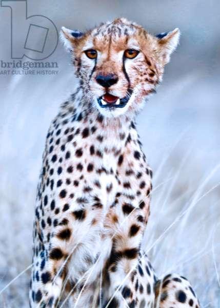 Young cheetah, 2019, (photograph)