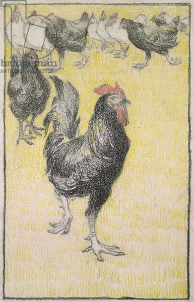 Cockerel, followed by black and white Hens (graphite with black and coloured chalk on white paper, edged with a line in black chalk)