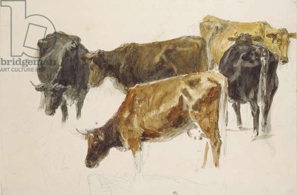 Study of a Group of Cows, c. 1801 (watercolour over graphite, with some scratching out, on wove paper)