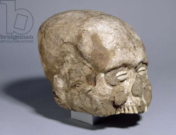 Portrait skull with cowrie shell eyes, Jericho, c.7th millennium BC (skull, plaster, shell)