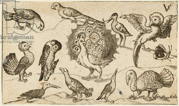 Peacock in centre surrounded by nine other birds, including a turkey, and a butterfly on a minimal ground with a small patch of grass, from Douce Ornament Prints Album I, 1572 (engraving on laid paper)