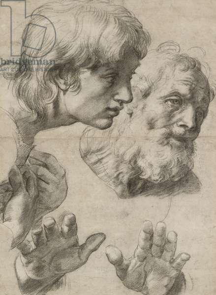 Studies of the Heads of two Apostles and of their Hands (black chalk touched with white on greyish paper)