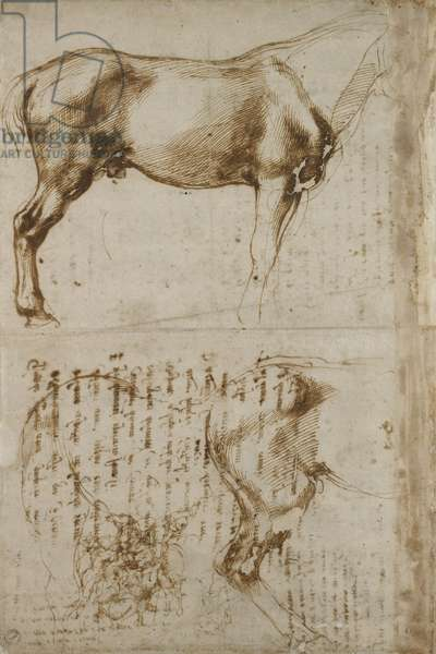 Anatomic Horse study, 1504 (pen & ink on paper)