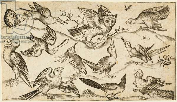 Eleven birds and two insects on minimal ground with owl with wings outstretched sitting on a branch in centre with other birds surrounding and teasing owl, from Douce Ornament Prints Album I, after 1572  (engraving on laid paper)