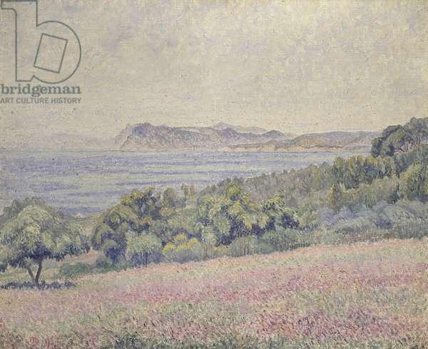 Thistles, Le Brusq, 1925 (oil on canvas)