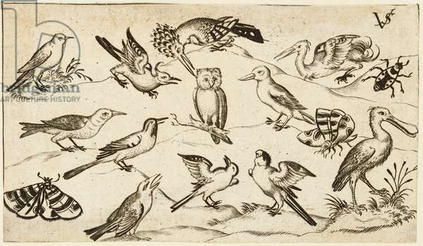 Twelve types of birds, including an owl and pelican, individually labelled and positioned on a minimal ground surrounded by a moth, butterfly, and ladybug, from Douce Ornament Prints Album I, after 1572  (engraving on laid paper)