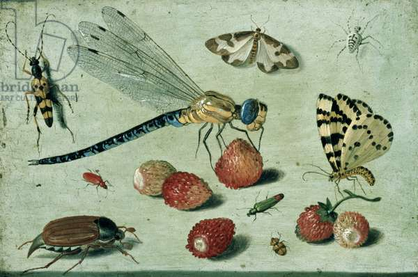 A Dragon-fly, two Moths, a Spider and some Beetles, with wild Strawberries, 17th century (oil on copper)