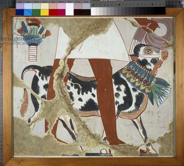 Copy of wall painting from private tomb 226, Thebes (I, 1, 327), festal bull (tempera)