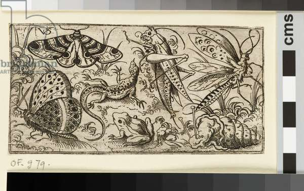 Group of insects and animals on a plain ground with grass, including a butterfly, a dragonfly, a moth, a cricket, a lizard, a frog, and a snail, from Douce Ornament Prints Album I, 1530-1562  (etching on laid paper)
