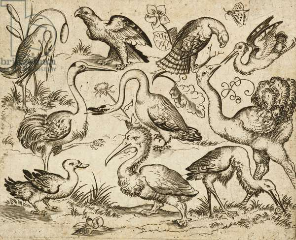 Ostrich on left side with nine other birds, including a heron and a pelican, depicted on a minimal ground with patches of foliage around some of the birds, from Douce Ornament Prints Album I, after 1557  (engraving and etching on laid paper)