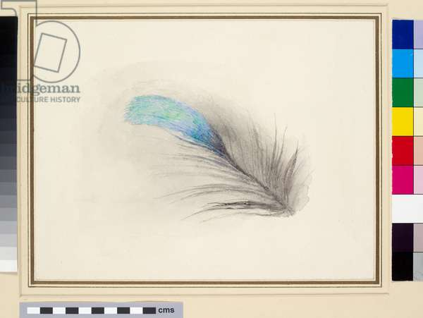 Feather of a Kingfisher's Back, enlarged (watercolour on wove paper)
