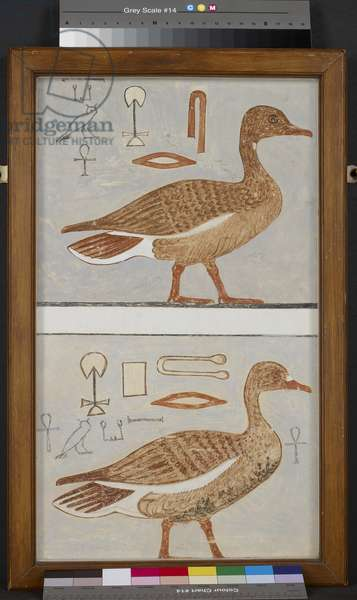 Copy of wall painting from a private tomb of Kaemankh, (III, 1, 132), Giza, geese (tempera)