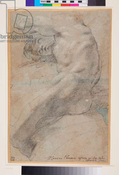 Study of a nude Man, c.1560-1609 (black & white chalks on blue-grey paper)
