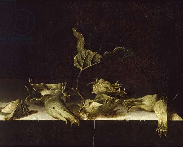 Still Life with Hazel-nuts, 1696 (oil on paper)