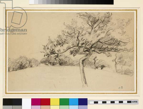 Study of the orchard at Eragny-sur-Epte with a tree in the foreground (black chalk on paper)