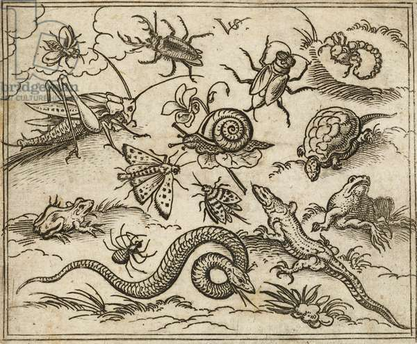 Group of insects and reptiles on plain ground with rocks, including an iguana, a lizard, a snake, a turtle, a scorpion, a snail, a spider, a beetle, and a cricket, from Douce Ornament Prints Album I, 1557 (etching on laid paper)
