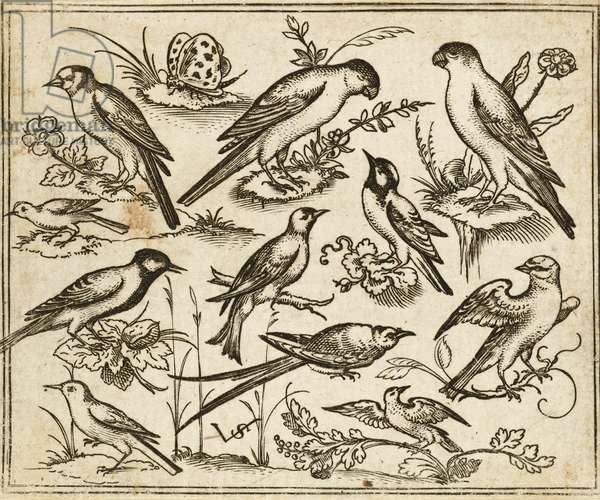 Eleven birds sitting on patches of flowering foliage and small branches on a minimal ground with a butterfly, from Douce Ornament Prints Album I, 1557 (etching and engraving on laid paper)