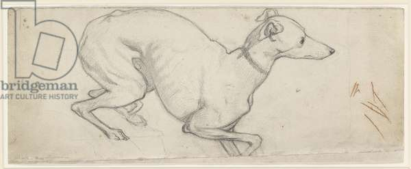 Study of a Greyhound (graphite on off-white paper)