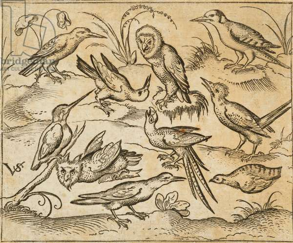 Ten birds sitting on branches and patches of grass, including two owls and a bird with long tail feathers chirping with head back in centre, from Douce Ornament Prints Album I, 1557 (etching and engraving on paper)