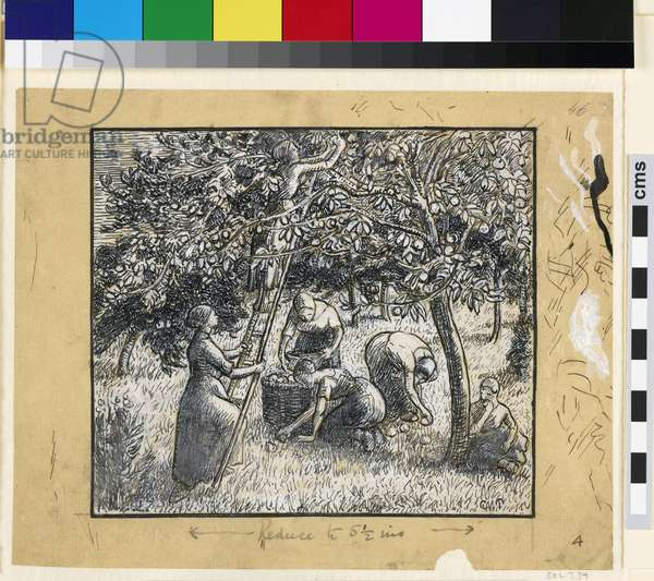 Compositional study of female peasants harvesting apples (pen & indian ink with chinese white on paper)