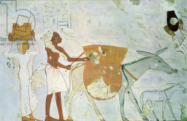 Donkey laden with corn, copy of a wall painting in Tomb 254, Thebes (egg tempera on board)