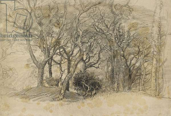 Study of Trees, Clovelly Park, 1834 (black chalk on pale greyish paper)