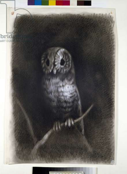 """Owl, copied from a Photograph of Mantegna's Fresco of """"The Martyrdom of Saint James"""" in the Church of Eremitani, Padua, by Arthur Burgess, 1872 or earlier (charcoal on wove paper)"""