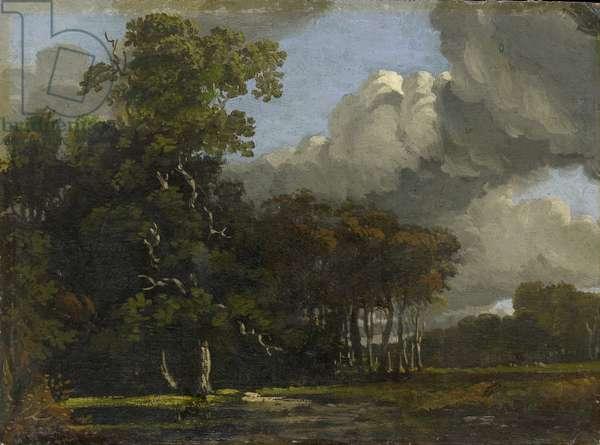 Woodland Landscape, c. 1816 - 1820 (oil on millboard)