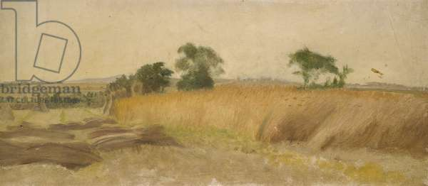 Study of a Cornfield (oil on canvas)