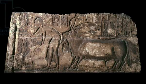 Sandstone block depicting Satepatenkhay presenting a sacrificial bull, 1333-23 BC (sandstone)