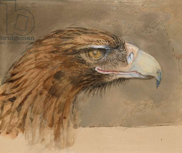 The Head of a common Golden Eagle, from Life, 8-11 September 1870 (w/c, bodycolour and pen and ink over graphite on pale brown wove paper)