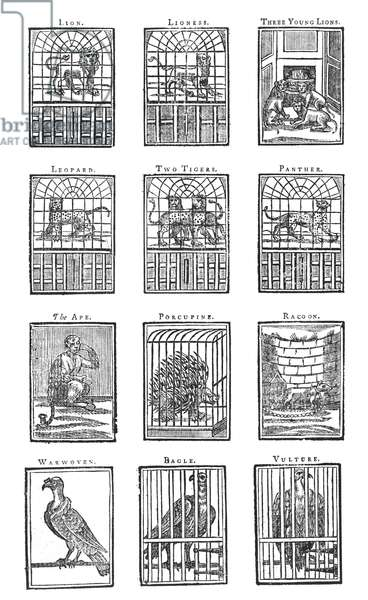 Montage of engravings illustrating the animals from the Tower of London menagerie, from 'Children's Guide to the Tower', 1741 (engraving)