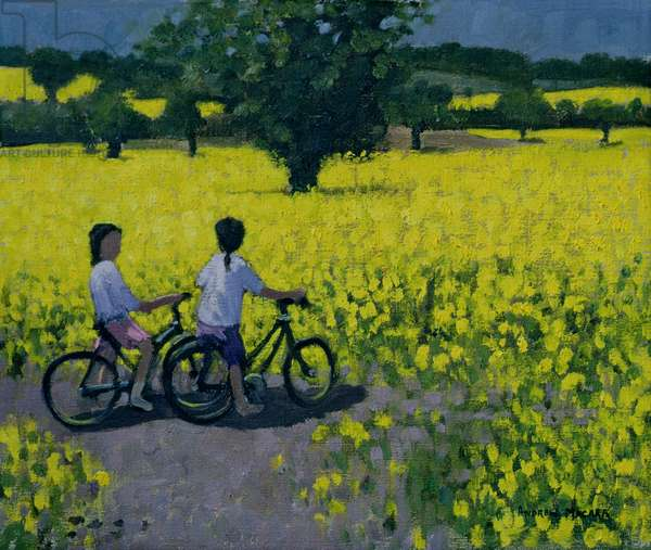 Yellow Field, Kedleston, Derby (oil on canvas)