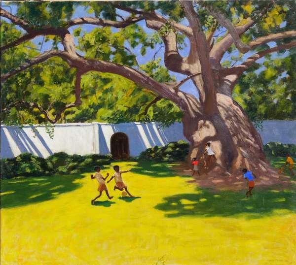 ANCIENT CAMPOR TREE,VERGELEGEN ESTATE,SOUTH AFRICA