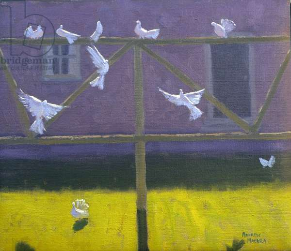 Doves, 1999 (oil on canvas)