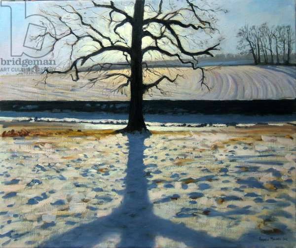 Tree and Shadow, Calke Abbey, Derbyshire (oil on canvas)