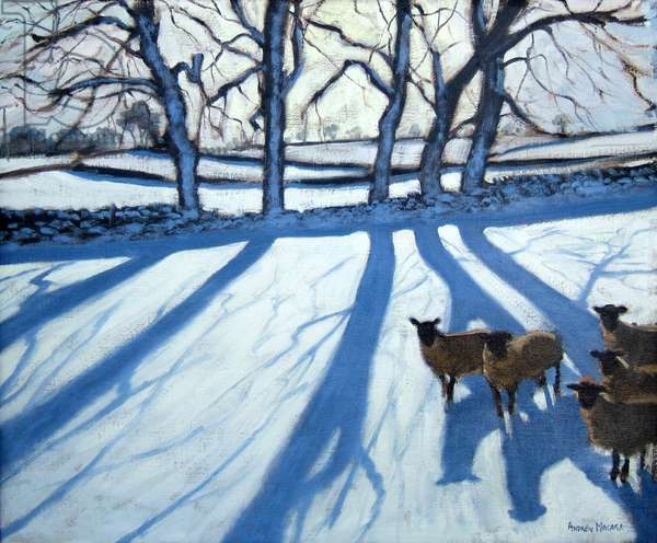 Sheep in snow, Derbyshire (oil on canvas)