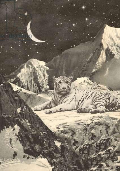 Giant White Tiger in Mountains