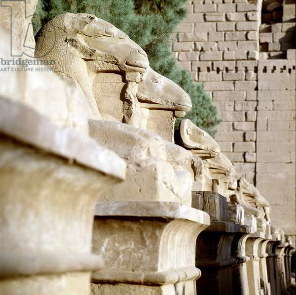 Karnak: Temple of Amon, allee (dromos) of the criosphinx (Sphinx at the head of beliers)