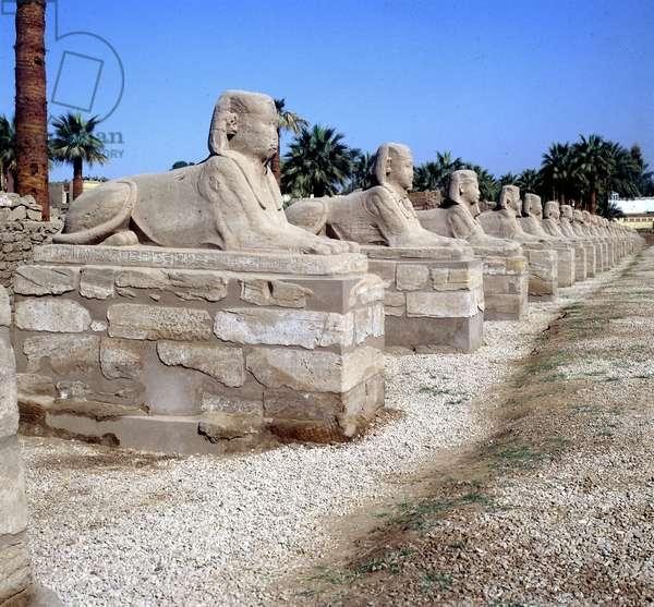 Louksor (Luxor): Temple Boulevard des Sphinxes