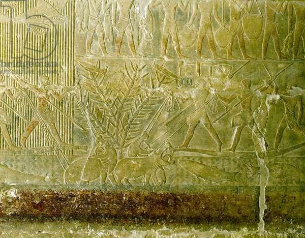 Hunting of hippos in the swamp, Saqqara (Sakkara), Mastaba de Mererouka