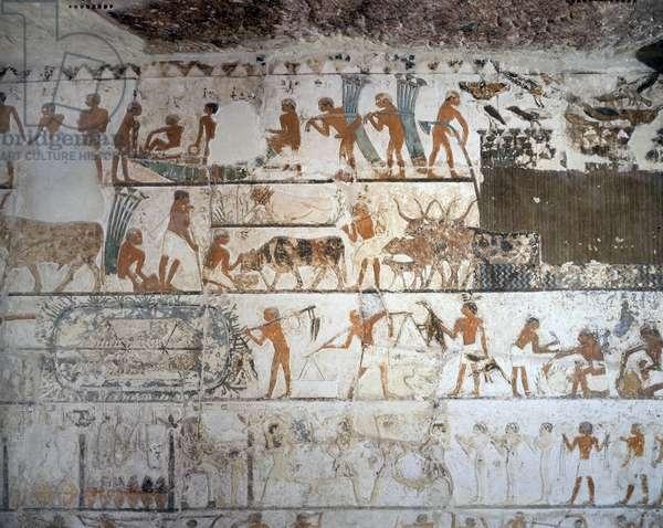 Saqqara (Sakkara), Nefer and Ka-hay Mastaba: Papyrus harvesting, grazing, bird catching