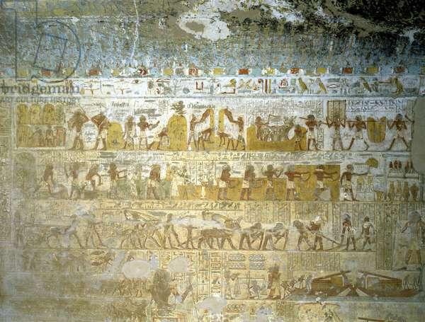 Elkab, Tomb of Paheri: Agricultural activities