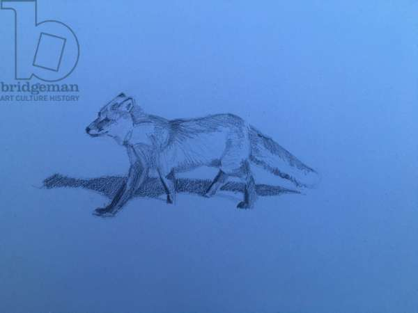 Fox, 2018, (pencil on paper)