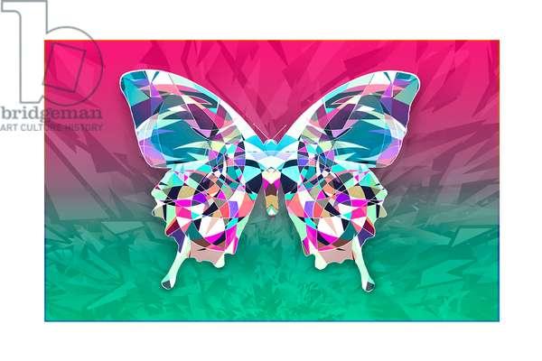 Butterfily